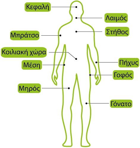 σωματομετρικές μετρήσεις evexis online