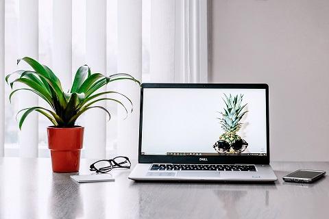 Φυτά στο γραφείο